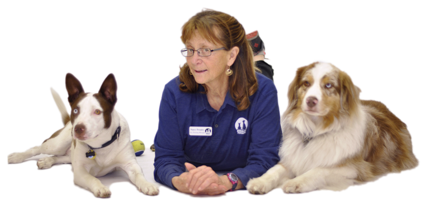 Train the Bay trainer Nancy Frensley with her Austrailian Shepherd and mixed dogs
