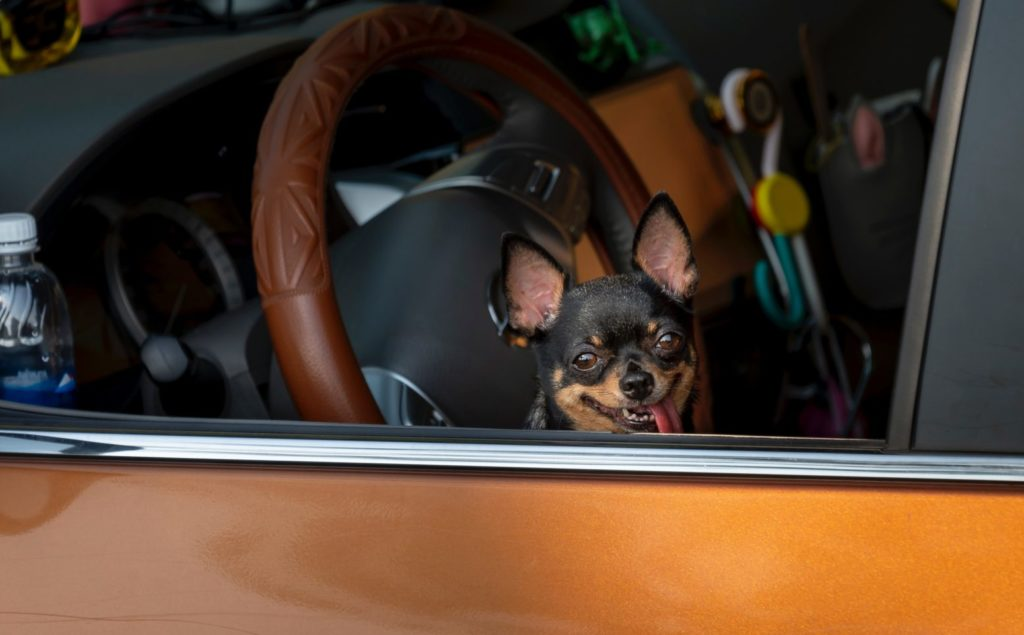 Pets in Hot Cars Can Kill
