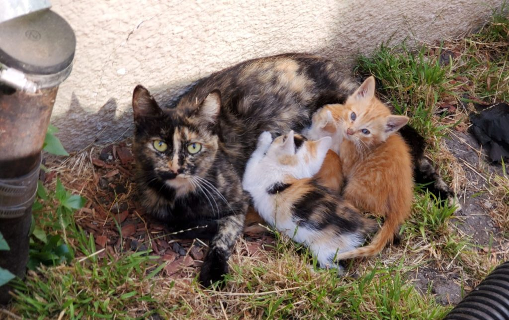 momma cat and kittens