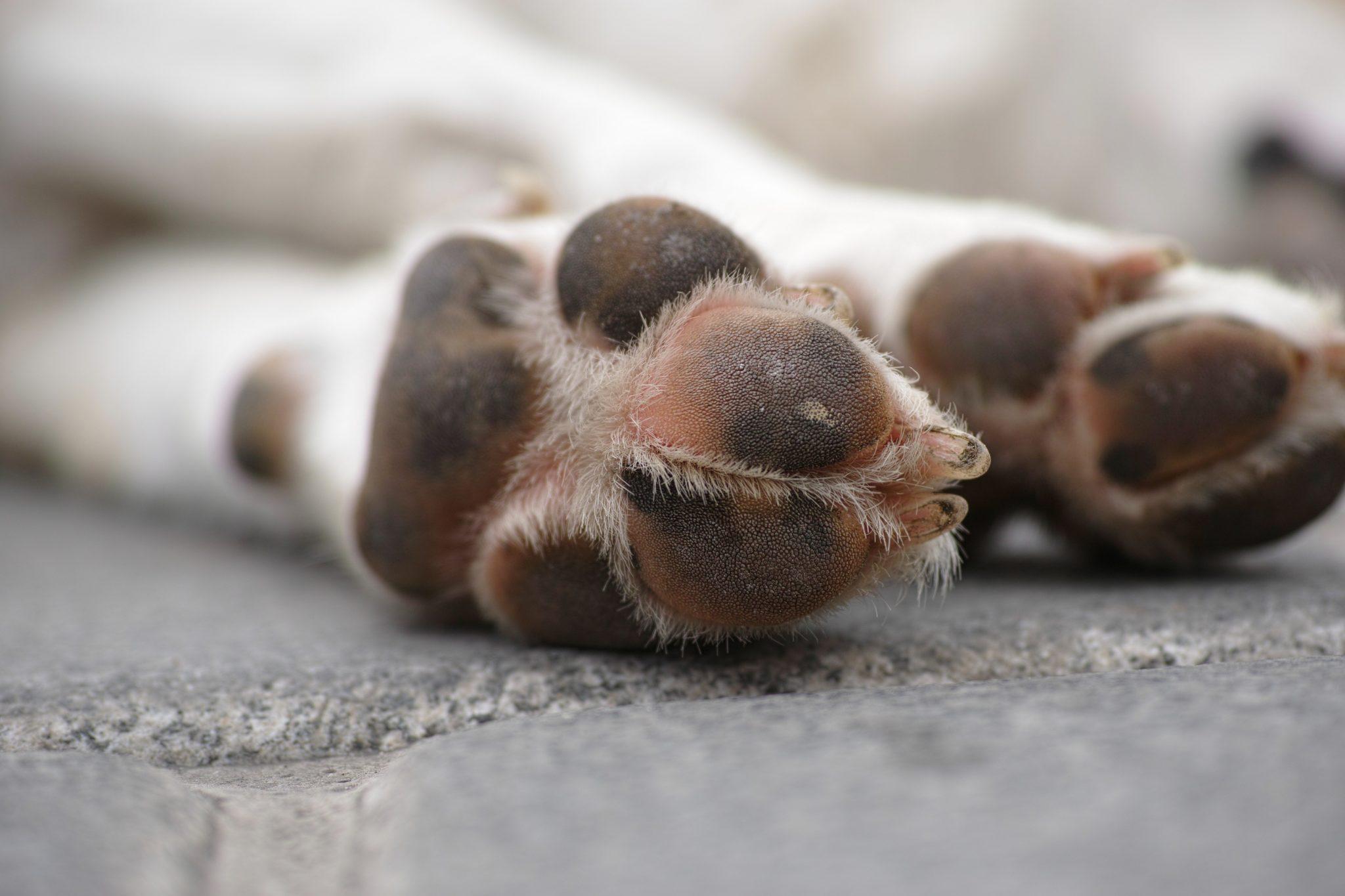 close up of dog paws