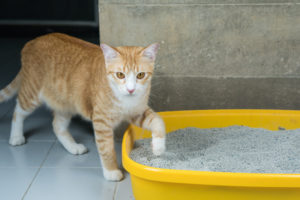cat stepping into litter box