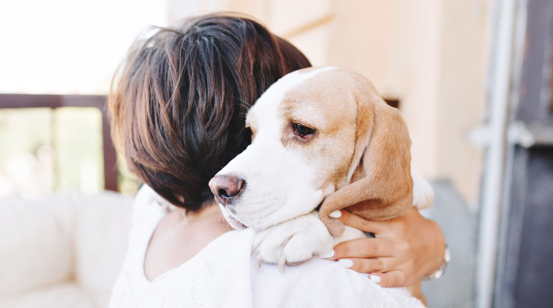 photo of owner holding aged terminal pet dog