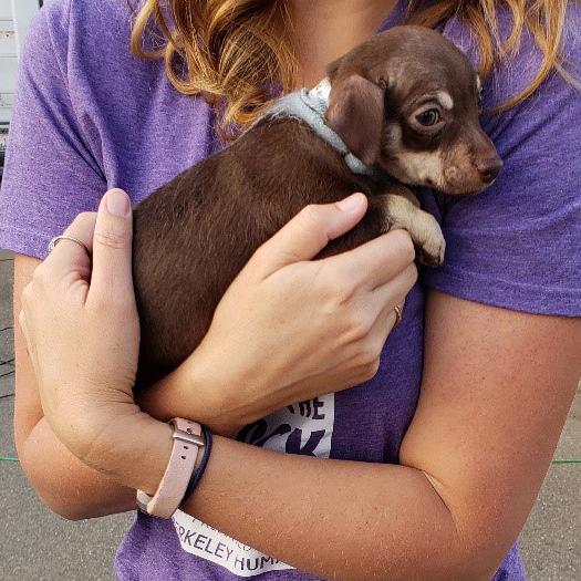 Adopt-a-thon September 18, 2021 for Berkeley Humane