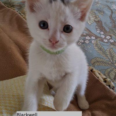 Blackwell named