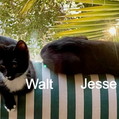 JesseWalt2 both-on-sofa-taken-by-t - 1 (edited-Pixlr)