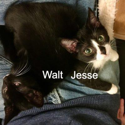 JesseWalt5 w-j-on-tims-lap - 1 (edited-Pixlr)