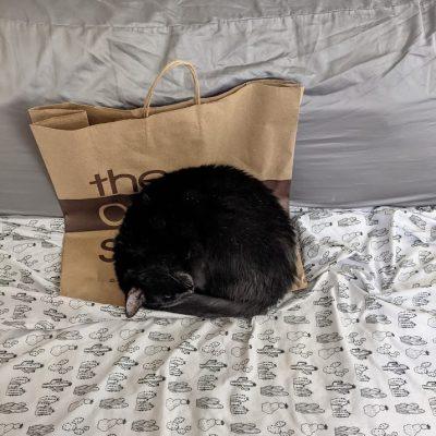 Nico4 curled up