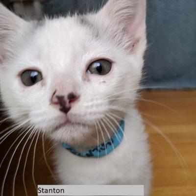 Stanton named