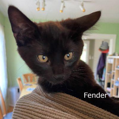 f-kitten-in-tims-hood - 1 (edited-Pixlr)