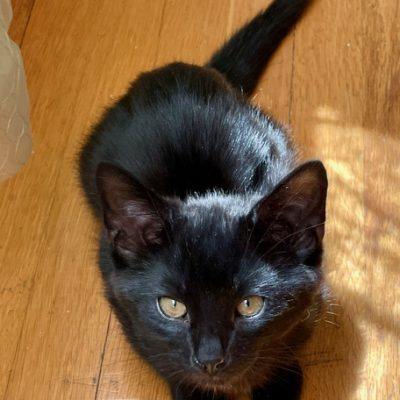 m-kitten-floor - 1 (1)