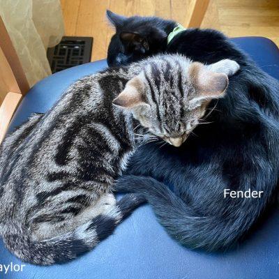 t-f-sleeping-on-chair - 1 (edited-Pixlr)